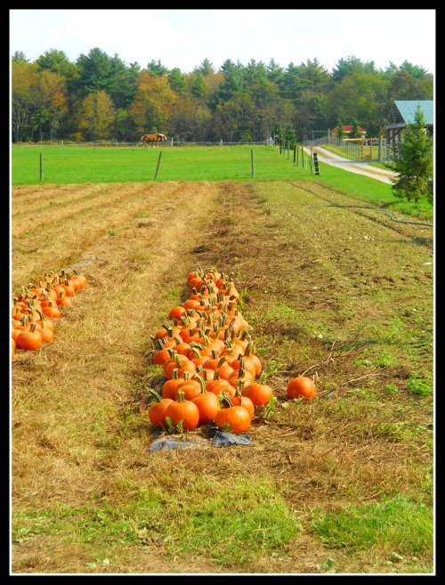 Photography: Autumn's Musings