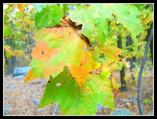 Photography: Autumn's Musings Continue