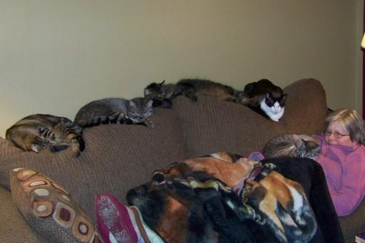 Credit: catexpert.blogspot.com