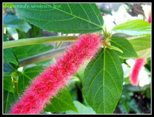 soft botany