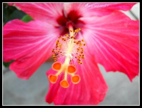 beautiful botany