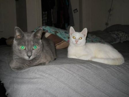 Don't glance into their eyes. They're busy collecting human data to report back to the mothership.