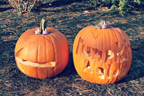 Carved Pumpkins / From The Siren's Tale
