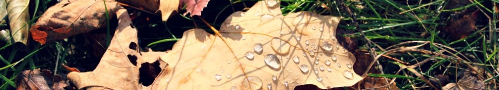 Autumn Dew / From The Siren's Tale