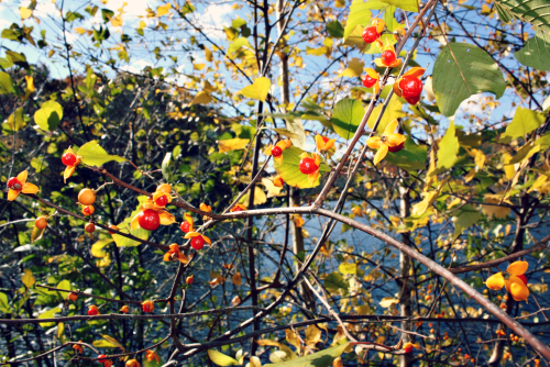 Autumn Berries / From TheSirensTale.com
