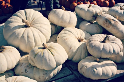 White Pumpkins / Support Your Local Farmer from The Siren's Tale