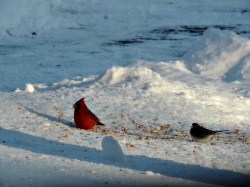 Winter Birds / from TheSirensTale.com