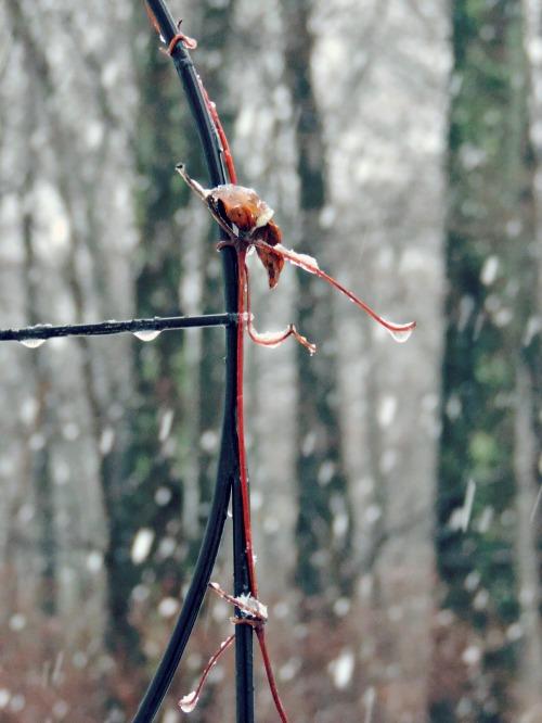 Winter Scene / from TheSirensTale.com