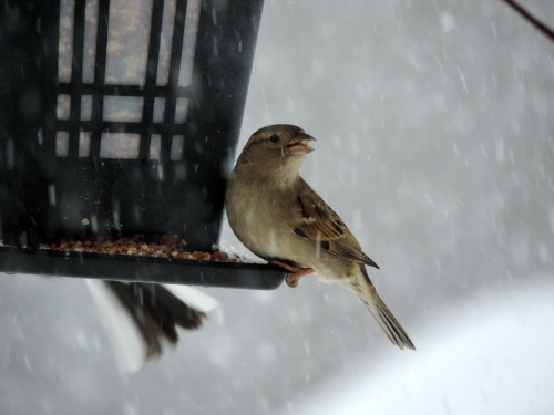 Winter Bird on Feeder / from TheSirensTale.com