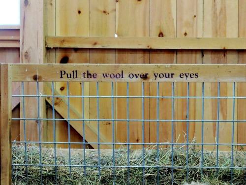 Pull the Wool Over Your Eyes / from TheSirensTale.com